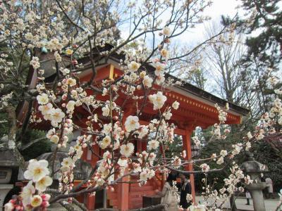 梅の北野天満宮、そして冬の特別公開・東寺観智院