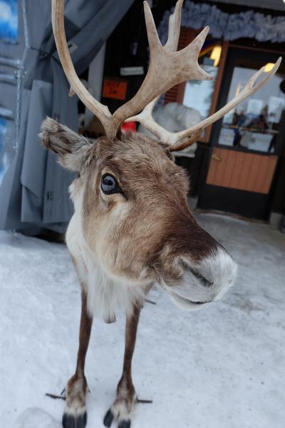 2度目のフィンランド 9日間のんびり旅 ~3日目 サーリセルカの町さんぽ~