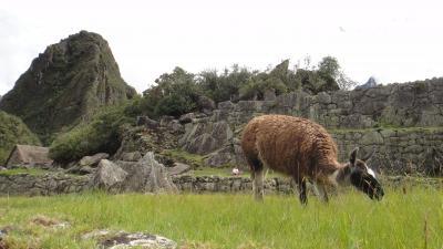 南米『イグアスの滝とマチュピチュ』の旅 ⑨ マチュピチュ