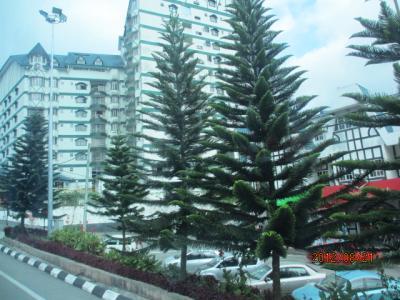 上海ー新加坡ー吉隆坡ー曼谷4都旅行記(62)キャメロン山中の都市「ブリンチャン」。