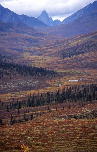 ユーコン準州 黄葉の旅