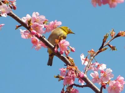 見沼自然公園に春を見に行ってきました。