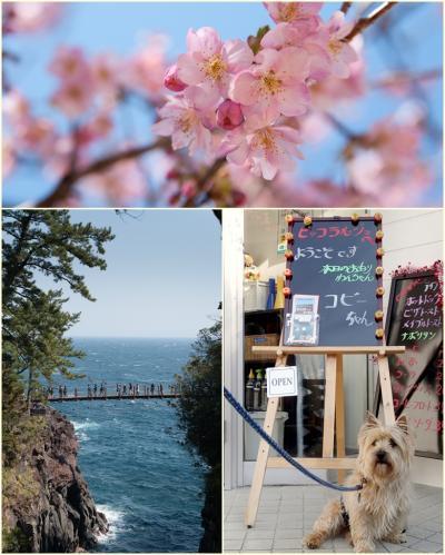 ワンコと桜を@伊豆高原~富戸港