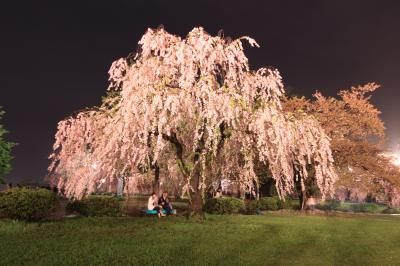 2泊3日みちのく桜旅 (弘前の夜桜)