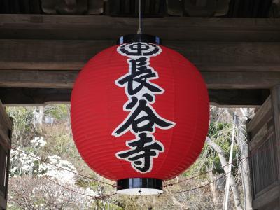 春の鎌倉①☆長谷寺・光則寺・極楽寺☆2014/03/25