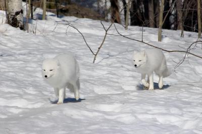ユーコン 極北&オーロラ(3/全5): クルアニ国立公園 → ホワイトホース(野生動物保護区)