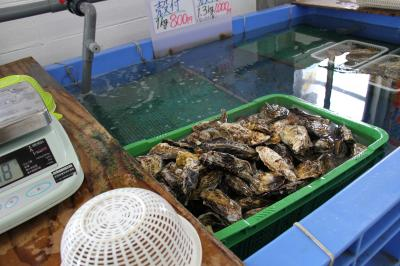 2014年 幸永丸水産で今年最後の牡蠣購入