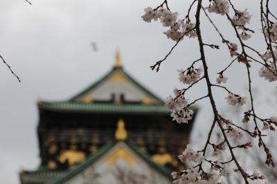 2014 大阪城のさくら散歩