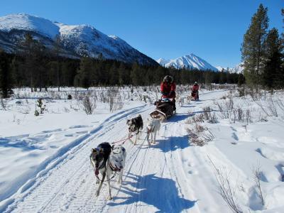 ユーコン 極北&オーロラ(4/全5): ホワイトホース(犬ぞり)⇔ カークロス