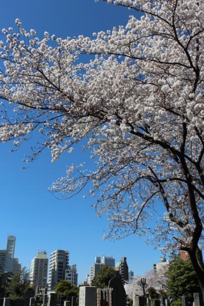 2014年、江戸時代からの桜の名所・染井霊園、飛鳥山公園の桜