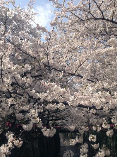 行列のできる中目黒 お花見 桜満開!