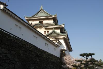 桜紀行 2014 PART 4 和歌山城を訪ねて (昼編)