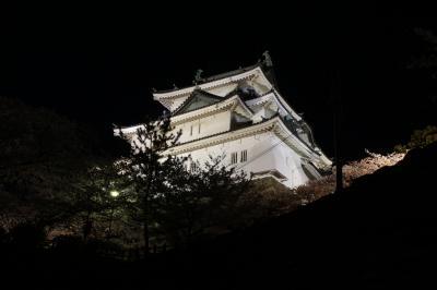 桜紀行 2014 PART 5 和歌山城を訪ねて(夜桜編)