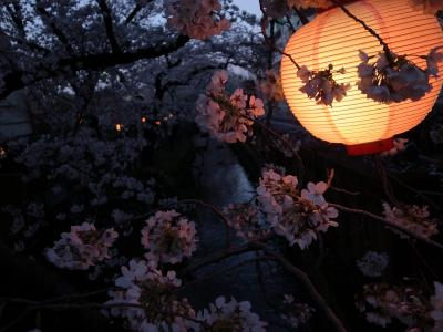 夕方から川崎桜並木散歩