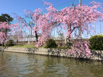 2014年3月 桑名桜めぐり