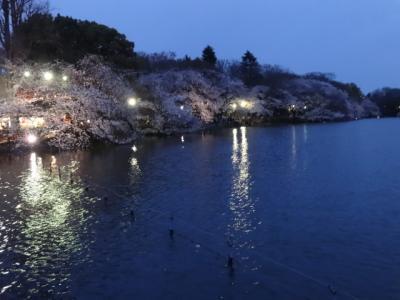 2014井の頭公園の桜は散り始め