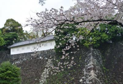 東京よくばりお花見ツアー…歩いて歩いて2万歩達成 ~乾通り、千鳥が淵、北の丸公園~