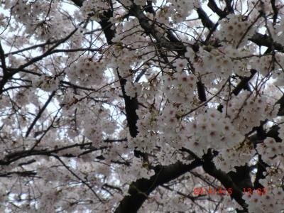 お花見だ~い\(^o^)/