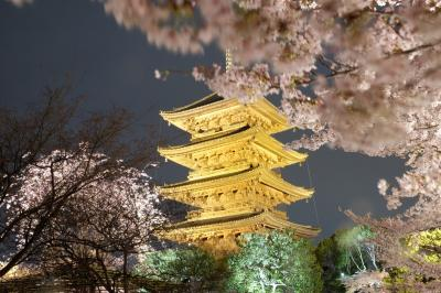 京都・奈良の桜紀行(京都編)