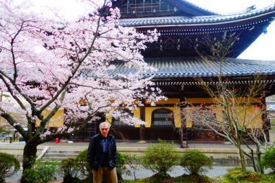 桜の名所醍醐寺とインクラインから南禅寺への桜並木を歩くプチ遠足