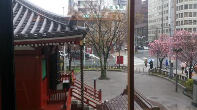さくら~さくら~♪♪♪♪♪東京あちこち街歩き。「浅草むぎとろ」昼懐石料理~名古屋。
