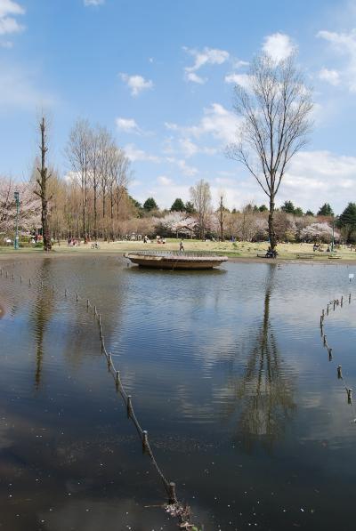 満開の桜を求めてのハイキング③彩の森入間公園
