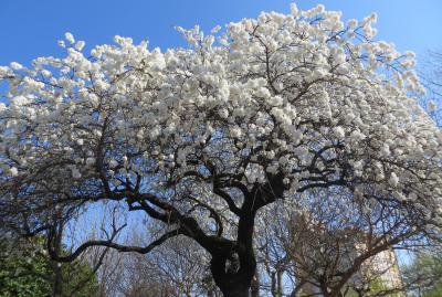 2014春、韓国旅行記27(7):4月6日(6):釜山、龍頭山公園、市民の鐘、ロッテ・デパート周辺