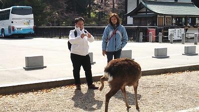 2014/04/11 タイ出張同僚と奈良・京都 奈良編