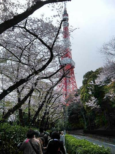 東京よくばりお花見ツアー…歩いて、歩いて2万歩達成  ~田安門、靖国神社、東京タワー、増上寺~