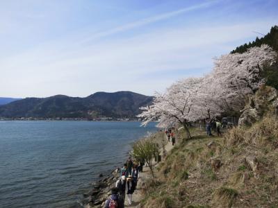 子どもと一緒に歩く、春爛漫の海津大崎の桜並木