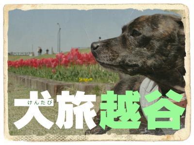 犬旅 ~越谷~