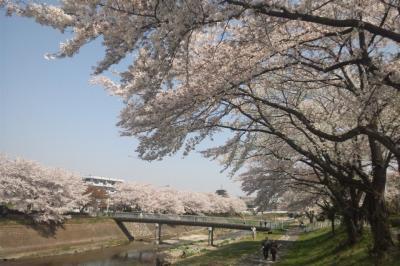 桜には小川がにあう。