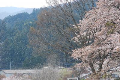埼玉県ときがわ町 慈光寺から花の里山めぐり