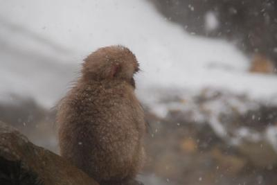 ★SNOW MONKEY BEER LIVE 2014③ ー初日は吹雪の地獄谷野猿公苑編★