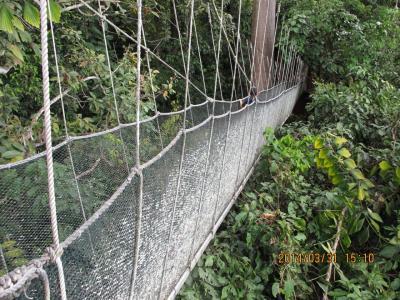 ボルネオ島・キナバル公園(2:ジャングルウォークとポーリン温泉)
