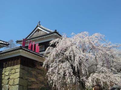 日帰り旅行♪上田城千本桜まつり♪