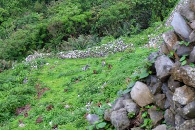 沖縄ツアー 二日目 雨の世界遺産 今帰仁城址