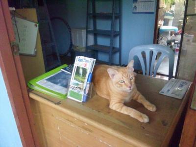 タイ(カンチャナブリ、サンクラブリー)、ペナン、ランカウイ他の旅 (+お猫様たち)