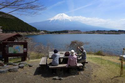 桜咲く、田貫湖一周散策路