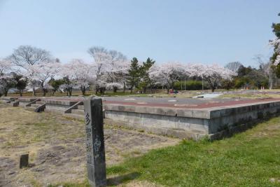 2014 桜咲く頃の多賀城跡(政庁跡)  ・ 多賀城碑を訪ねる  多賀城市  宮城県