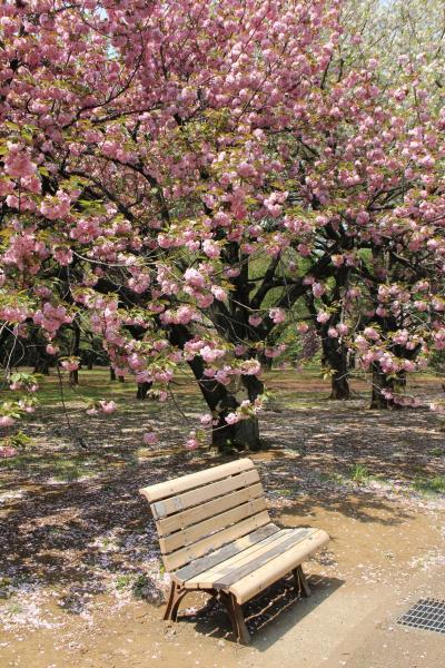 八重桜から季節はツツジに……新宿御苑