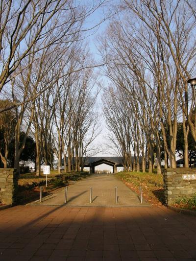 早朝ウォーキングで桜を愛でながら市内各地を巡る・・・⑥久喜菖蒲公園往復