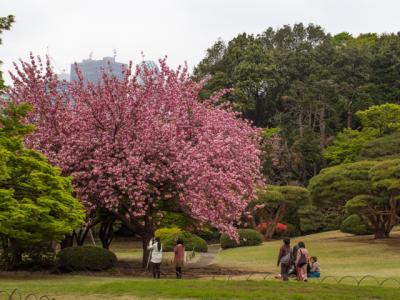新宿御苑を散策(2014年4月)