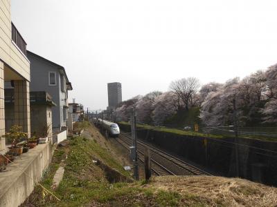お城と桜 2 霞城