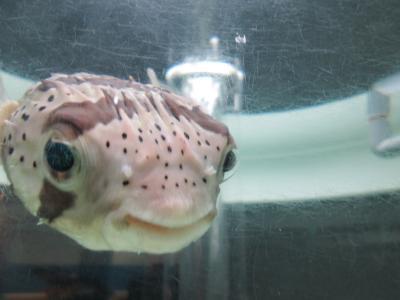 突然の札幌行き!2日目「水族館で魚たちに癒される」旅
