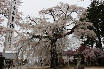 南信州 高森町「瑠璃寺」 源頼朝 寄進桜を観る