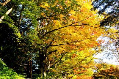 上田城址公園 秋の彩り