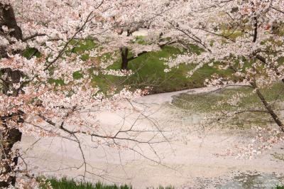 桜と温泉を楽しみに信州へ:(1)上田城 千本桜まつり