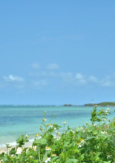 沖縄本島 北へ南へ 2014