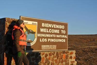 その13 2014 春 EL  DANSHARI  PATAGONICO   ペンギンの島・マグダレーナ島
